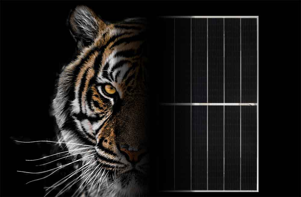 Jinko Tiger Solar Panels by PSW Energy